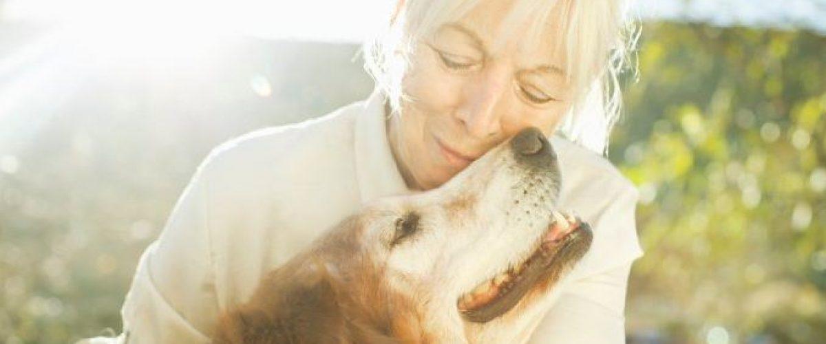 Animais e Idosos: união perfeita
