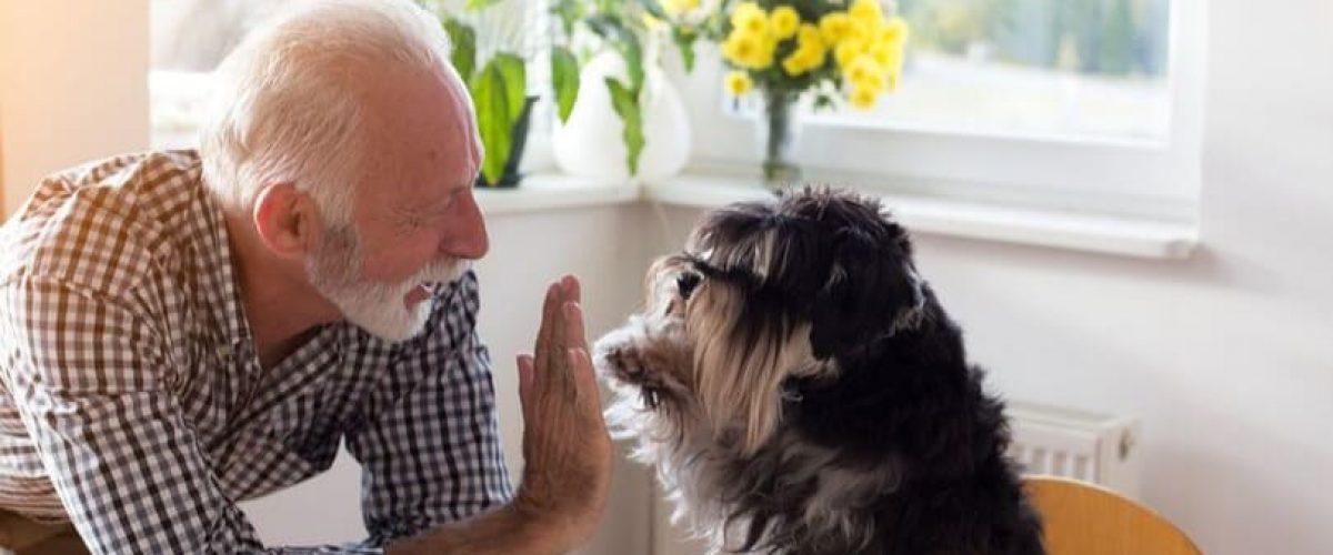 Quais as Melhores Raças de Cachorro Para Fazer Companhia Para Idosos?