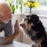 raças de cachorro para idosos
